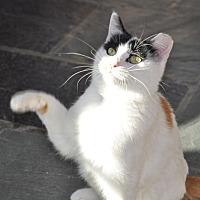 Adopt A Pet :: Elsa - Aurora, IL
