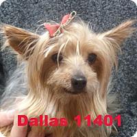 Adopt A Pet :: Dallas - baltimore, MD