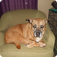 Adopt A Pet :: Jethro - North Jackson, OH