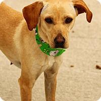 Adopt A Pet :: Brianne - Lafayette, IN