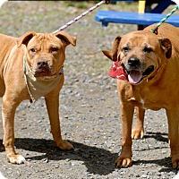 Adopt A Pet :: Talon (URGENT) - Pottsville, PA