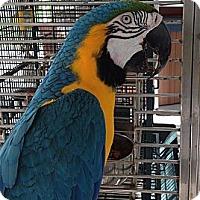 Adopt A Pet :: Taco - Punta Gorda, FL