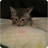 Adopt A Pet :: Fluffy Three - New Egypt, NJ