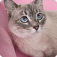 Adopt A Pet :: Nala - Eagan, MN