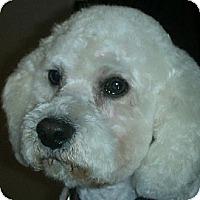 Adopt A Pet :: Leo - La Costa, CA