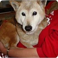 Adopt A Pet :: Lili - Las Vegas, NV