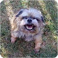 Adopt A Pet :: Flint in Madison, WI. - Sun Prairie, WI