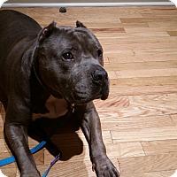 Adopt A Pet :: Banyan - nashville, TN