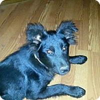 Adopt A Pet :: Kaia - Hamburg, PA