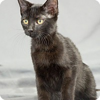 Adopt A Pet :: Marie - Edmond, OK