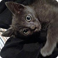 Adopt A Pet :: Blue - Riverhead, NY