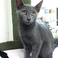 Adopt A Pet :: Blue Jay - Trevose, PA