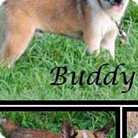 Adopt A Pet :: Buddy - Crowley, LA