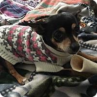 Adopt A Pet :: Baby Girl - Livonia, MI