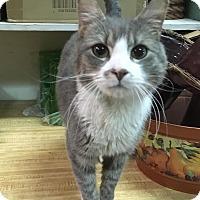 Adopt A Pet :: Oliver - East Brunswick, NJ
