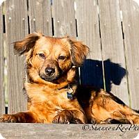 Adopt A Pet :: Tango - Vacaville, CA