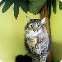 Adopt A Pet :: Mochas - West Des Moines, IA