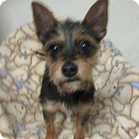 Adopt A Pet :: Reesie - Bartonsville, PA