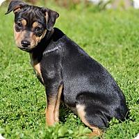 Adopt A Pet :: Zuma - Southington, CT