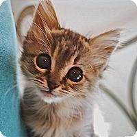 Adopt A Pet :: Juniper - Durham, NC