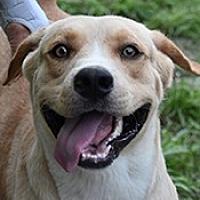 Adopt A Pet :: Butterscotch - Jarrell, TX