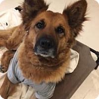 Adopt A Pet :: Millie - El Cajon, CA