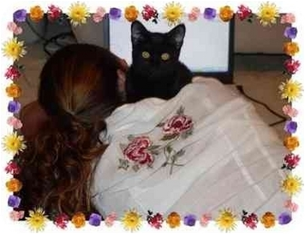 Domestic Shorthair Kitten for adoption in KANSAS, Missouri - ROXY