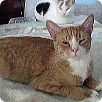 Adopt A Pet :: XPost - RW - Brooklyn, NY