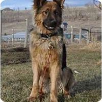 Adopt A Pet :: Hunter - Hamilton, MT
