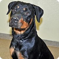 Adopt A Pet :: Mya - Port Washington, NY