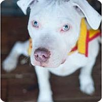 Adopt A Pet :: Alec - Reisterstown, MD