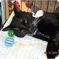 Adopt A Pet :: Zeus - Riverside, RI