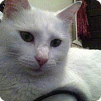 Adopt A Pet :: Snow - Kirkwood, DE