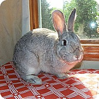 Adopt A Pet :: Banner - North Gower, ON