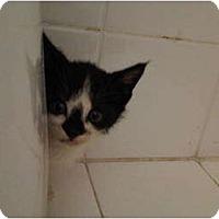 Adopt A Pet :: Jack of Diamonds - Miami, FL
