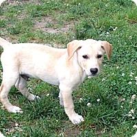 Adopt A Pet :: Baby Marley - Marlton, NJ