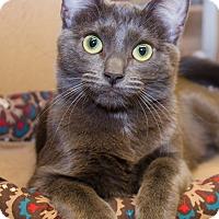 Adopt A Pet :: Domino - Irvine, CA