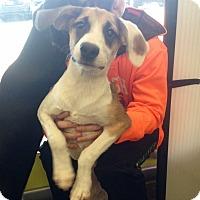 Adopt A Pet :: Maya - Pompton Lakes, NJ