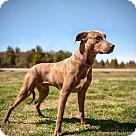 Adopt A Pet :: Kujo