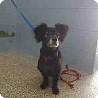 Adopt A Pet :: URGENT on 4/15 SAN BERNARDINO - San Bernardino, CA