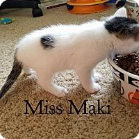 Adopt A Pet :: Miss Maki - Wichita Falls, TX