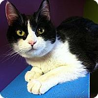 Adopt A Pet :: Ricki - Topeka, KS