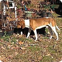 Adopt A Pet :: Copper - Hilham, TN