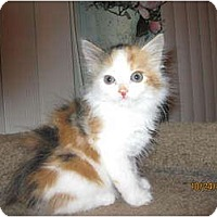 Adopt A Pet :: Tupelo Honey - Catasauqua, PA