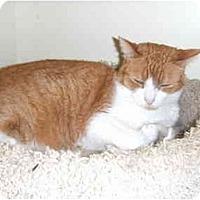 Adopt A Pet :: Rusty - Lake Charles, LA