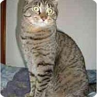 Adopt A Pet :: Felix - Milwaukee, WI