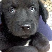 Adopt A Pet :: Tanya - Morgantown, WV