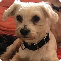Adopt A Pet :: RILEY - Boca Raton, FL
