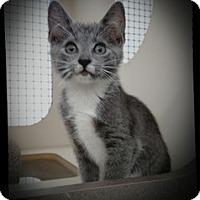 Adopt A Pet :: The Cisco Kid - Richmond, VA