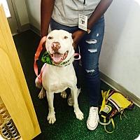 Adopt A Pet :: Pink - San Angelo, TX